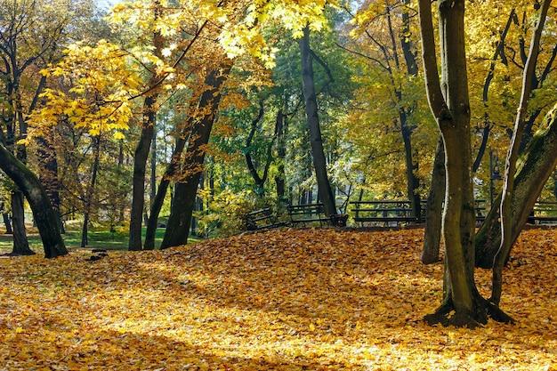 木々やベンチの下に黄色の葉がある秋の都市公園。