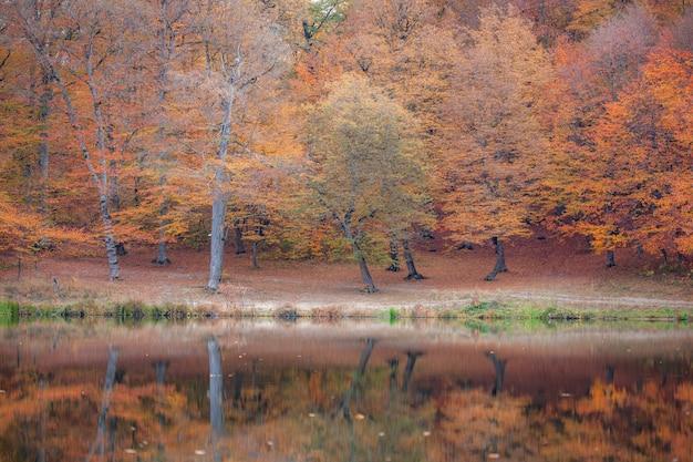湖と秋の色の森