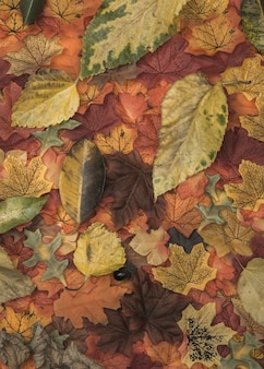 Autumn colored leaves texture