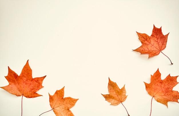 秋のカラフルな構図。