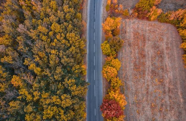秋のカラフルな風景:オレンジと赤の葉のある秋の森を通る田舎道-平面図のドローンショット。