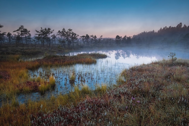 Autumn colorful landscape with swamp at sunrise in the fog
