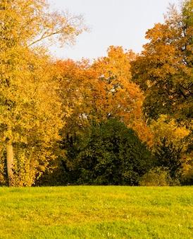 Осенний красочный пейзаж с деревьями и разноцветной листвой, парк для прогулок.