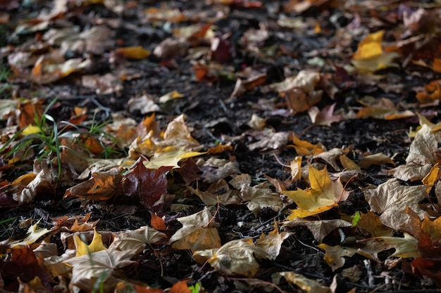 夕方の地面の公園の秋の色とりどりの葉