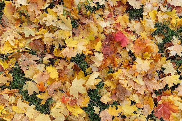 地面の公園の秋の色とりどりの葉