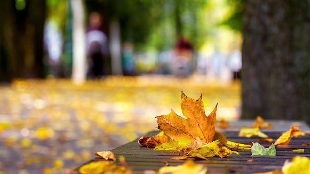 Осенние разноцветные листья на скамейке в парке