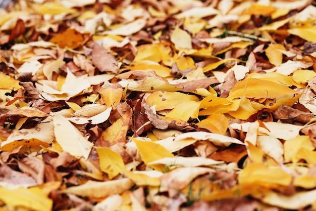 秋の色とりどりの葉