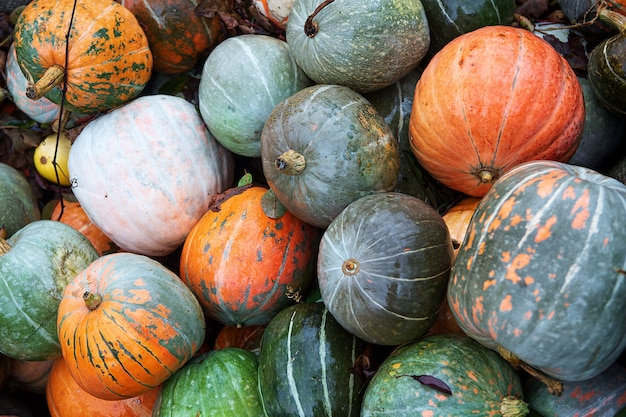 Autumn colorful pumpkins for halloween top view