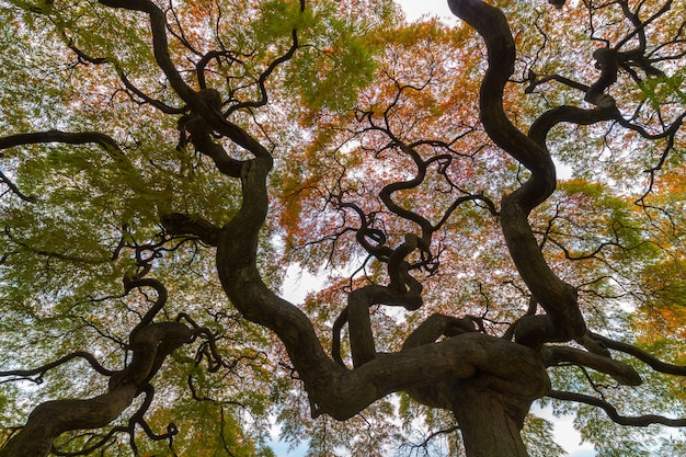 カエデの木の下の秋のカラフルな赤いカエデの葉