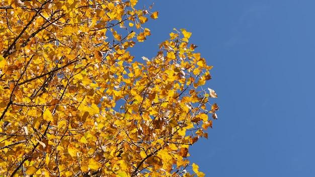 秋のカラフルなスケッチの背景