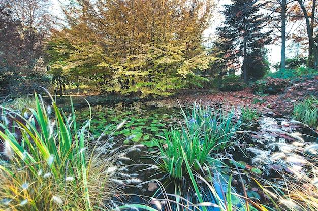 연못이 있는 정원의 단풍