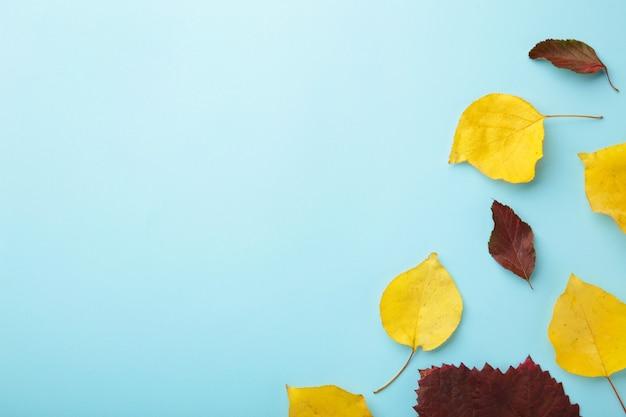 가 구성입니다. 가 복사 공간이 파란색 배경에 나뭇잎. 평평한 평지, 평면도, 복사 공간