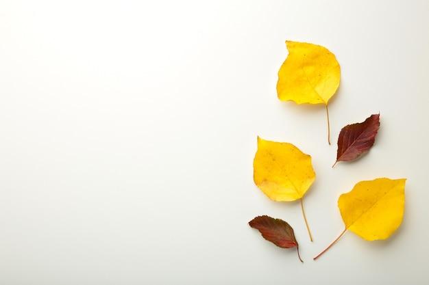 秋の構成。白い背景に紅葉