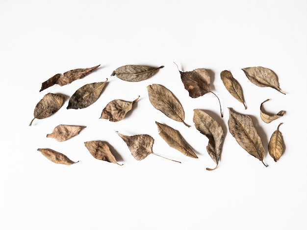 Autumn composition. border made of brown leaves on white background. fall concept. autumn thanksgiving texture. flat lay, top view, copy space