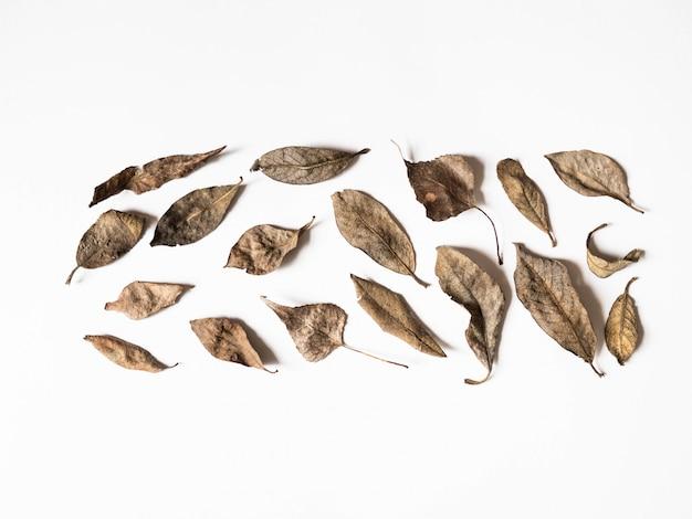 秋の組成物。白い背景の上の茶色の葉で作られた境界線。秋のコンセプトです。秋の感謝祭のテクスチャ。フラット横たわっていた、トップビュー、コピースペース