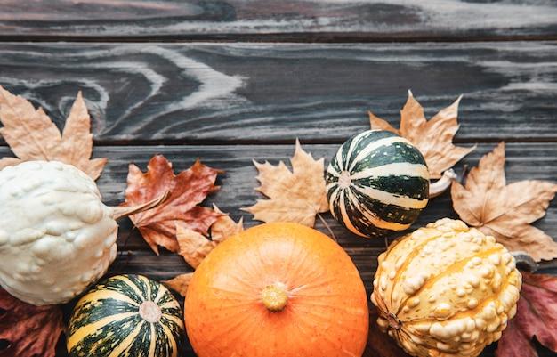 가을 구성, 아늑한 가을 시즌, 호박, 나무 배경의 나뭇잎. 추수 감사절의 상징, 평평한 평신도