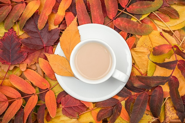 Autumn composition. cup of coffee with milk on variegated colorful leaves, close up.