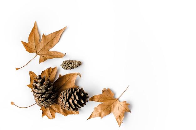 Осенняя композиция. сушеные, осенние кленовые листья и шишки на белом фоне. плоская планировка, вид сверху, копия пространства. фото высокого качества