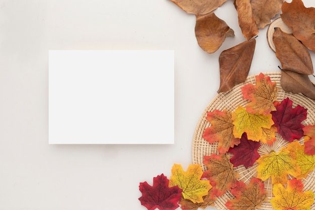 Autumn composition, dried leaves. cotton flowers and pine cones on beige background. flat lay, top view with copy space