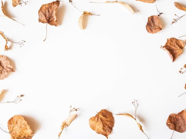 秋の組成物。シナノキの葉と白い背景の上の花を乾燥させます。秋、秋、感謝祭の日のコンセプトです。フラット横たわっていた、トップビュー、コピースペース