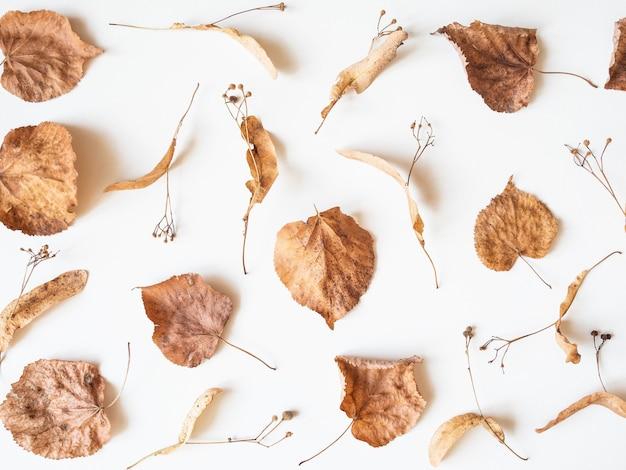 秋の組成物。シナノキの葉と白い背景の上の花を乾燥させます。秋、秋、感謝祭の日のコンセプトです。フラット横たわっていた、トップビュー、