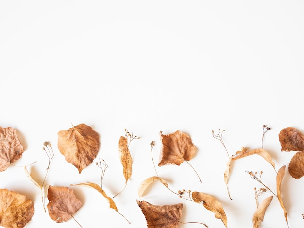Autumn composition. dried linden leaves and flowers on a white background. autumn, fall, thanksgiving day concept. flat lay, top view, copy space