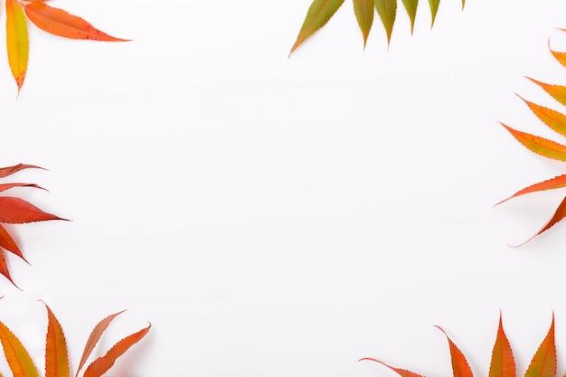 Осенняя композиция. кадр из осенних разноцветных листьев на белом фоне. осень, концепция падения. плоская планировка, вид сверху, копия пространства