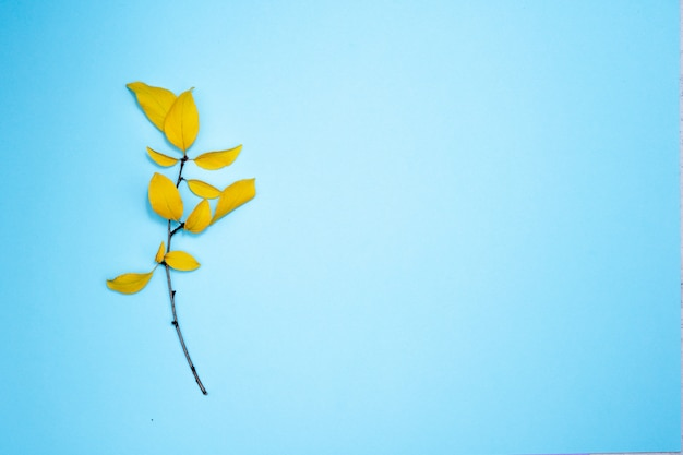 Autumn composition, frame of leaves. branch with yellow leaves, plum, on light blue background