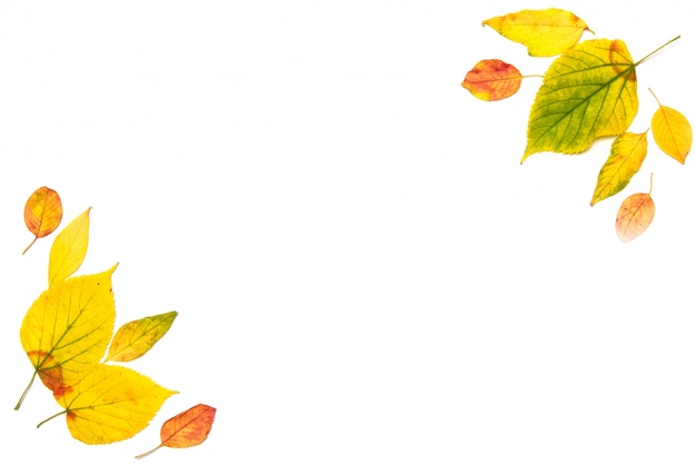 Autumn composition. frame made of autumn maple leaves isolated on white