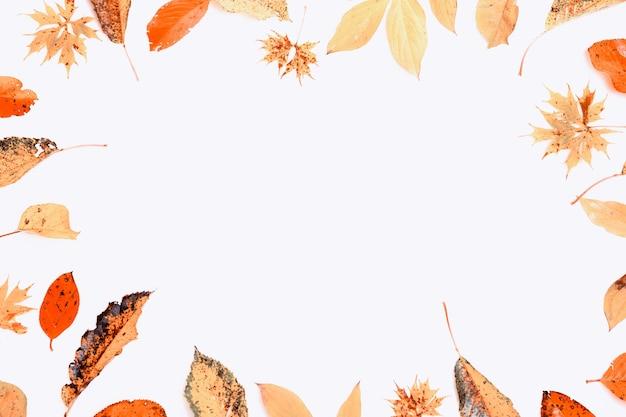 가을 구성입니다. 흰색 배경에 있는 가을 마른 다색 잎과 초크베리 열매로 만든 프레임입니다. 가을, 가을 컨셉입니다. 평평한 평지, 평면도, 복사 공간