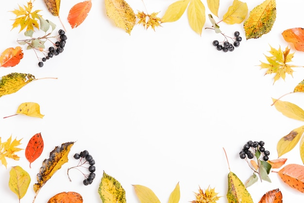 Осенняя композиция. рамка из осенних сухих разноцветных листьев и ягод аронии на белом фоне. осень, концепция падения. плоская планировка, вид сверху, копия пространства