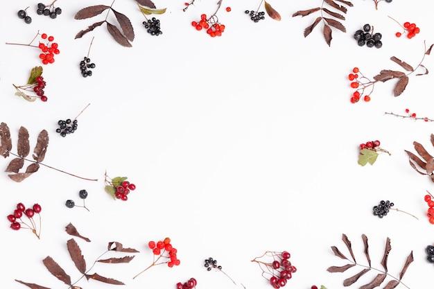 가을 구성입니다. 흰색 배경에 있는 가을 마른 다색 잎과 초크베리 열매로 만든 프레임입니다. 가을, 가을 컨셉입니다.