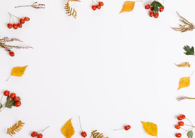 가 구성입니다. 흰색 배경에 단풍, 딸기, 꽃, 산사나무, 헤더로 만든 프레임. 평평한 평지, 평면도, 복사 공간