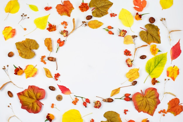 가을 구성. 말린 꽃과 단풍으로 만든 프레임. 플랫 레이
