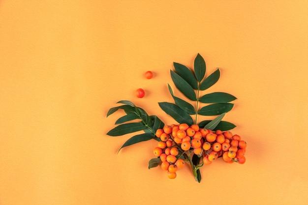 Осенняя композиция. рамка из ягод рябины на оранжевом фоне. минимализм, плоская планировка, место для текста.