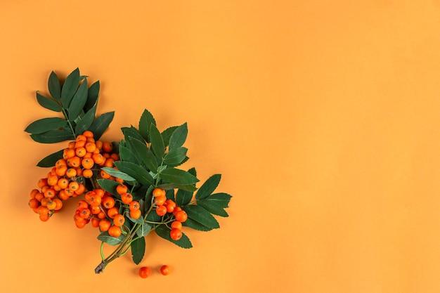 秋の構成。オレンジ色の背景にナナカマドの果実のフレーム。ミニマリズム、フラットレイ、テキスト用のコピースペース。