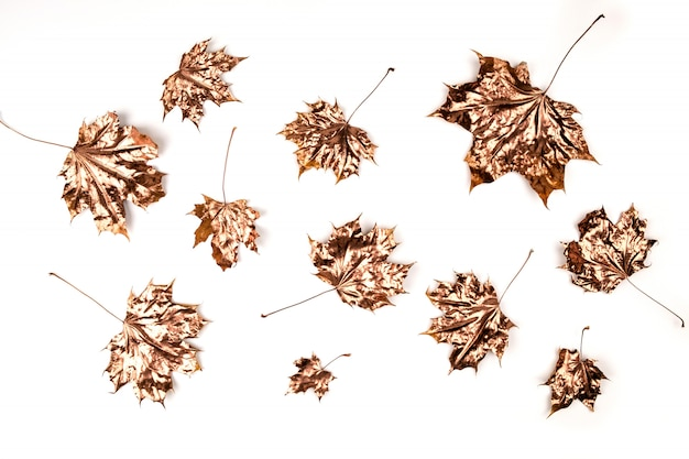 Autumn composition. golden maple leaves on white.