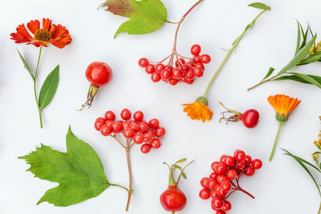 Autumn composition made of autumn plants viburnum berries, dogrose, orange and yellow flowers