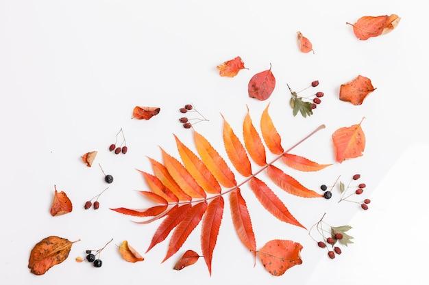 가을의 건조한 다색 잎과 초크베리 열매, 흰색 바탕에 호손으로 만든 가을 구성. 가을, 가을 컨셉입니다. 평평한 평지, 평면도, 복사 공간