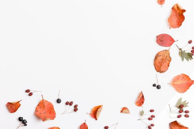 白い背景の上のチョークベリー、サンザシの秋の乾燥したマルチカラーの葉とベリーで作られた秋の構成。秋、秋のコンセプト。フラットレイ、上面図、コピースペース