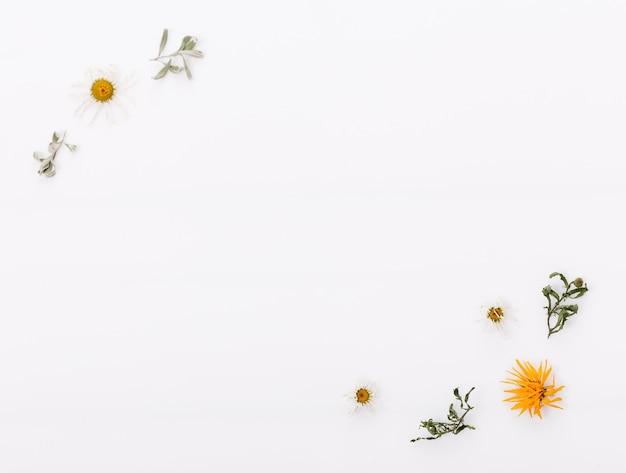白い木製の背景に秋の乾燥したマルチカラーの葉とデイジーの花で作られた秋の構成。秋、秋のコンセプト。フラットレイ、上面図