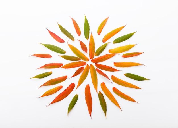 흰색 배경에 가을 마른 다색 잎으로 만든 가을 구성. 가을, 가을 컨셉입니다. 평평한 평지, 평면도, 복사 공간