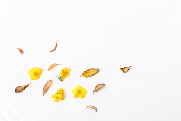 Осенняя композиция из осенних сухих разноцветных листьев на белом деревянном фоне. осень, концепция падения. плоская планировка, вид сверху, копия пространства