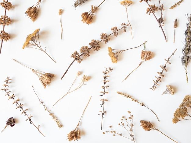 乾燥した別の植物と白い背景の上の花の秋の組成物。上面図。フラットレイ