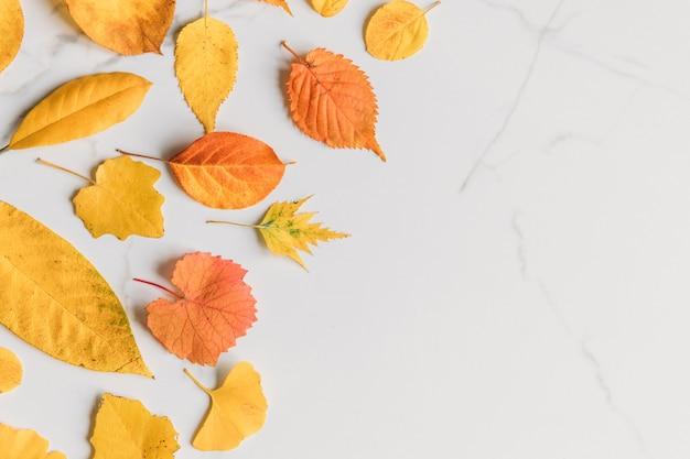 흰색 대리석 배경, 평면 위치, 평면도에 건조 색된 노란 잎의가 조성. 가을 개념.