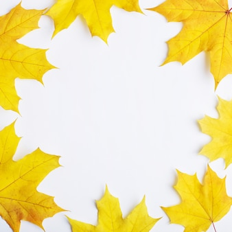 白い背景の上の葉の秋の組成。