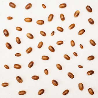 Autumn composition. pattern made of acorn on white background with copy space