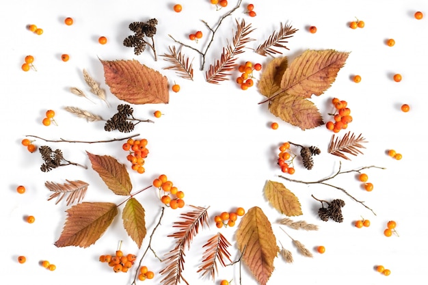 Autumn composition. pattern made of leaves, cones and rowan on white background.