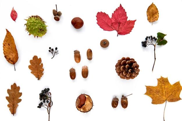 가 구성입니다. 흰색 배경에 격리된 말린 잎, 가지, 솔방울, 딸기, 밤, 도토리로 만든 패턴입니다. 템플릿 모형 가을, 할로윈. 평면 위치, 복사 공간 배경