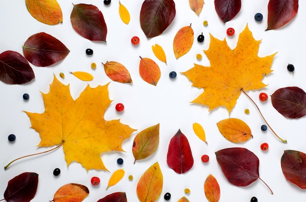 Autumn composition of vibrant red and yellow leaves on a white background.